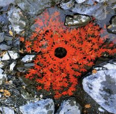 Andy Goldsworthy